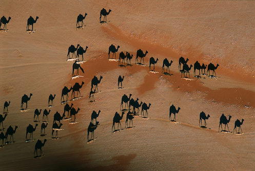 Camel caravan (shadows), photo from directly overhead. KGOV use by permission; (c) George Steinmetz