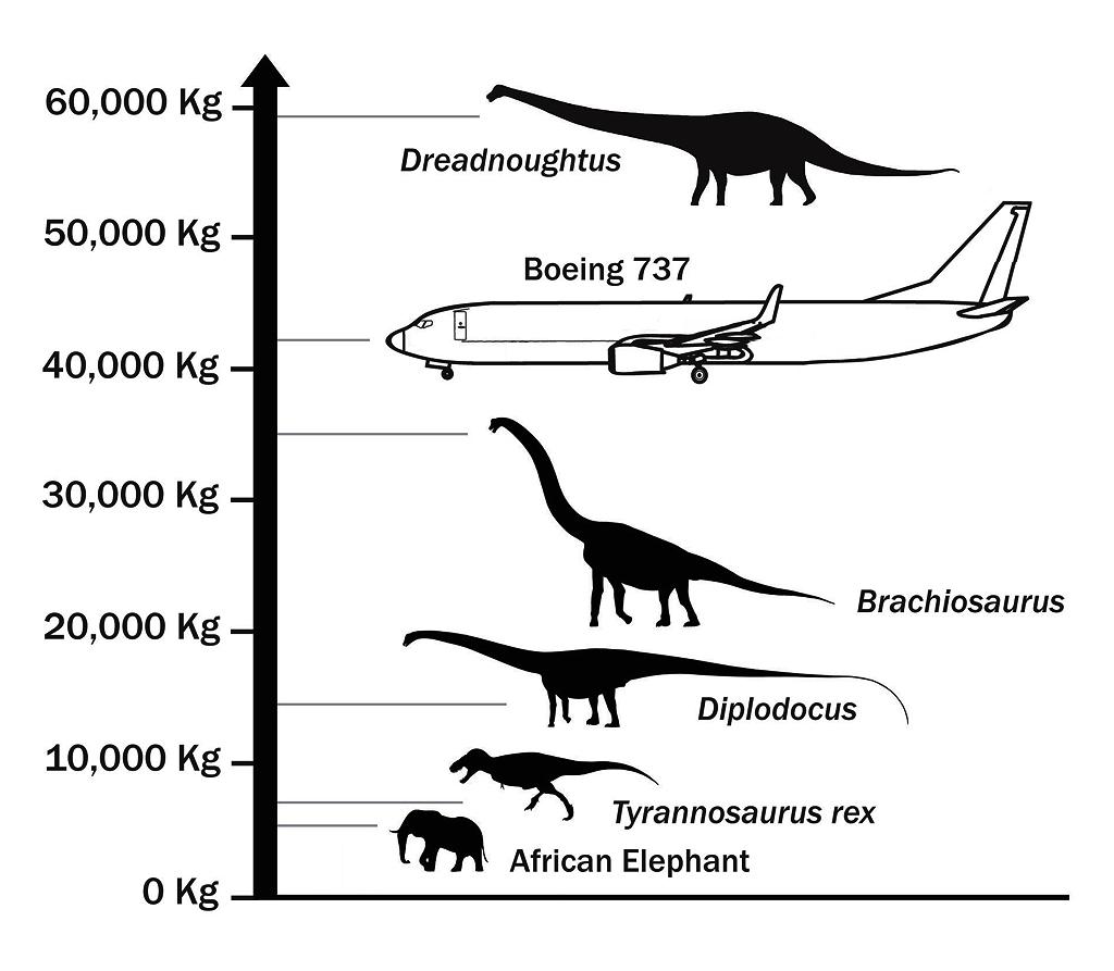 Behemoth, aka Dreadnoughtus, finally discovered!