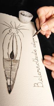 ink-pen-squid-fossil.jpg