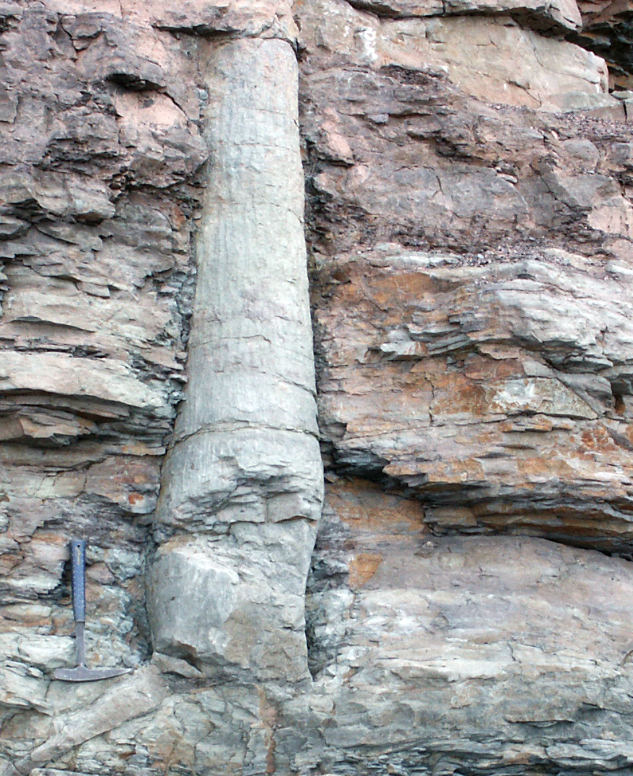 Photo of a polystrate tree