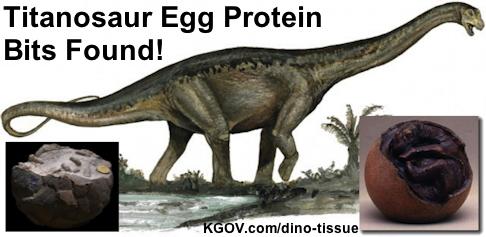 Image of Titanosaur Egg Protein Bits Found!