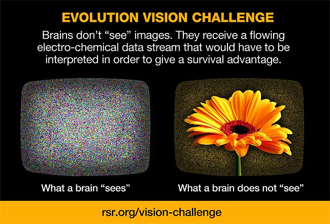 "Graphic showing that a brain does not ""see"" a flower, etc., but a chemical electrical symbolic encoding of the image"